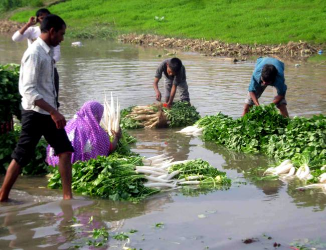 dirty water veg washing najibabad
